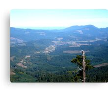 Snag With a View Canvas Print