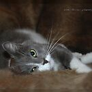 Furry Cat © Vicki Ferrari by Vicki Ferrari