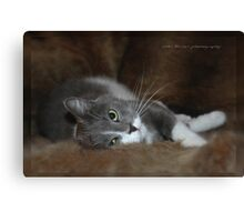 Furry Cat © Vicki Ferrari Canvas Print