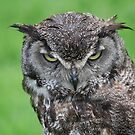 Great Horned Owl by Declan Carr