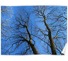 Tree Trees Kahl Sky Blue Poster