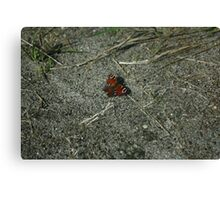 Butterfly Butterflies Insect Canvas Print