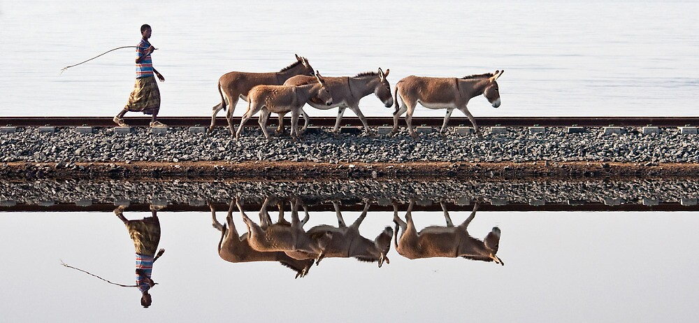 Donkeys by Karen Millard