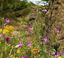 Natural Flowers and Rock by Paul Barnett