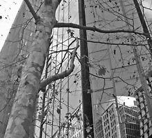 Martin Place winter by Timothy John Keegan