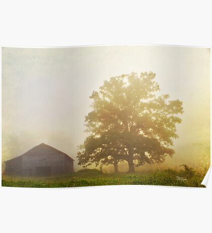 Perfect  Morning Fog Poster