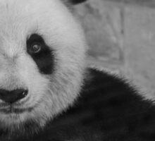 Panda - Black and White Sticker