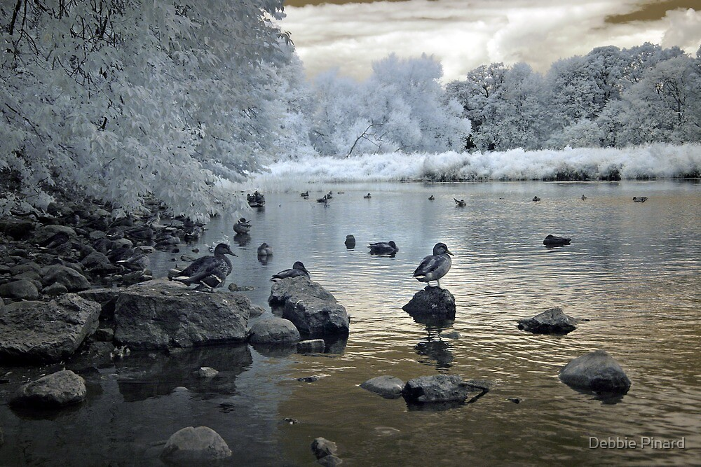 Rideau River Birds - Ottawa Ontario Infrared by Debbie Pinard