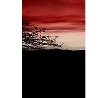 cherry sky Photographic Print