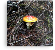 Mushroom (Available in iphone, ipod & ipad cases) Metal Print