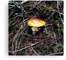 Mushroom (Available in iphone, ipod & ipad cases) Canvas Print