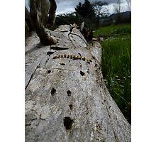 Used Log Photographic Print