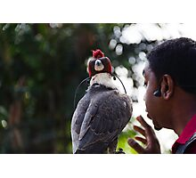 Hawk with eyes covered at a show inside the Jurong Bird Park in Singapore Photographic Print