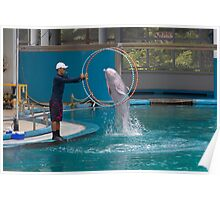 Dolphin going through a hoop at the Underwater World in Sentosa in Singapore Poster