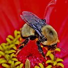 Busy Bee by Larry Trupp