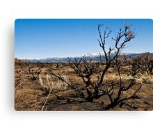 After the Burn Canvas Print