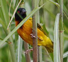 Yellow Bird ?? by AnnDixon