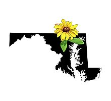 Maryland Silhouette and Flower Photographic Print