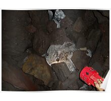 Another Ice picture of Melinis caves Poster