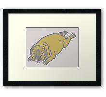 pug belly Framed Print