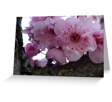 how many blossoms on a branch ~ who can possibly answer that! Greeting Card