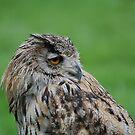 Turkmen (turkmenistan) Owl by Declan Carr