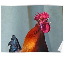 Hahn Gockel Poultry Crow Colorful Farm Poster