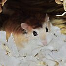 Roborovski Hamster called Cheese by AnnDixon
