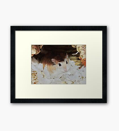Roborovski Hamster called Cheese Framed Print