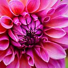 New Bloom by Ray Clarke