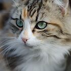 Cute Kitty by handyandypandy