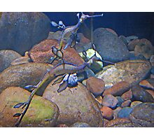 """Weedy Seadragon 4""  by Carter L. Shepard Photographic Print"