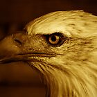 Bald Eagle by PinkK