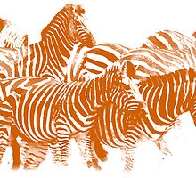 Zebra (Burning Orange) by Joe Stallard