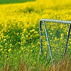 Gate and Canola by Leon Heyns