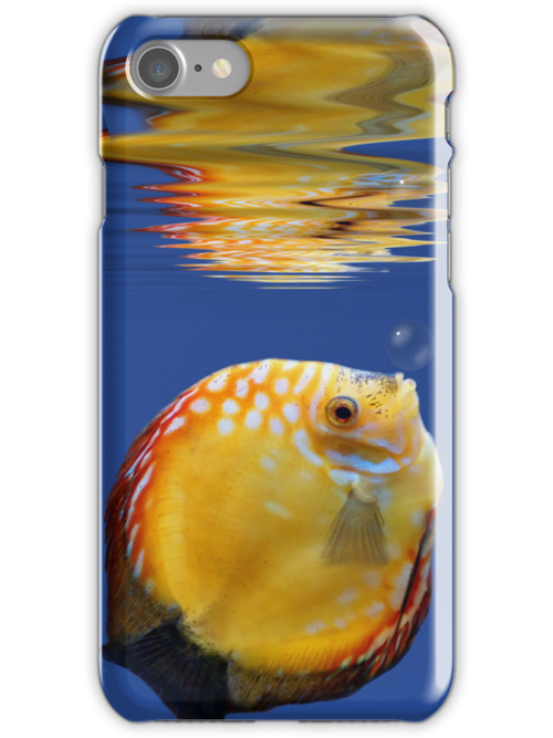 Tropicalfish in a blue ocean by southmind