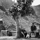 The Shade Tree by adrianpym