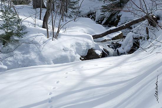 Snowprints by Susan R. Wacker