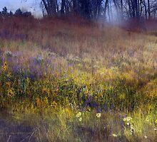 fog and light: flowered hillside by R Christopher  Vest