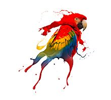 Creative parrot Photographic Print