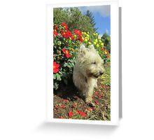 Murphy Greeting Card