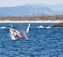 Another Whale of a Time - 1 by Odille Esmonde-Morgan