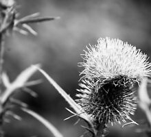 A Study in Thistle by Brandon Kamp