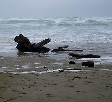 Driftwood by Jess Meacham