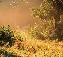 Misty Morning Salt Marsh Pond, Gilford, NH by Steve Anthony