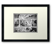 Lions and Tigers and Bears! Framed Print