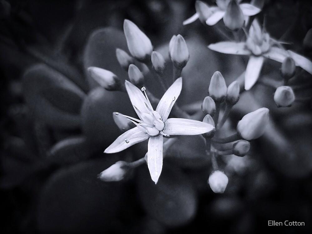 Daydream by Ellen Cotton
