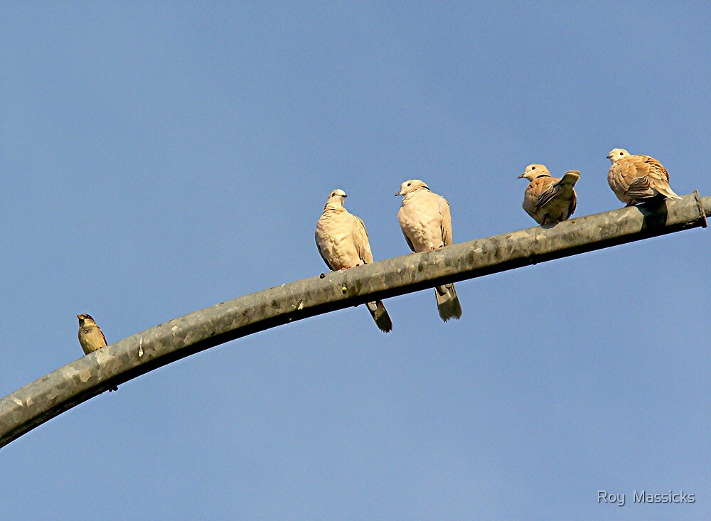 He says he's seen the light and wants to join the doves for peace group.........! by Roy  Massicks