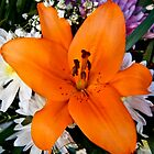 Orange lily by pcfyi