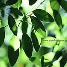 Green Leaves by -aimslo-